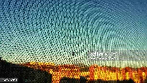 close-up of mosquito against sky during sunset - one animal stock pictures, royalty-free photos & images