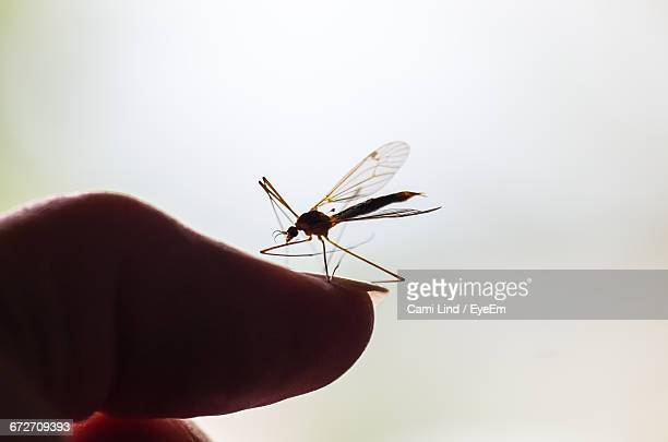 Close-Up Of Mosquito On Hand Against White Background