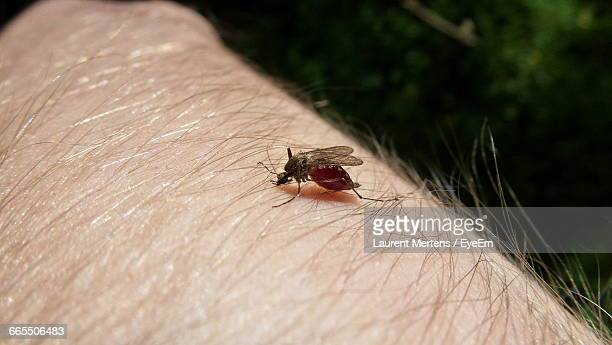 Close-Up Of Mosquito On Human Hand