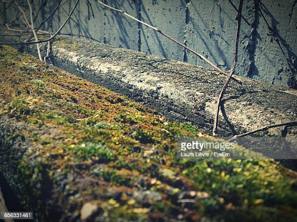close-up of moss covered retaining wall - laura cover stock pictures, royalty-free photos & images