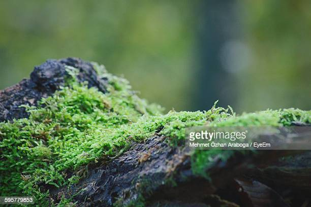 close-up of moss covered rock - moss stock pictures, royalty-free photos & images