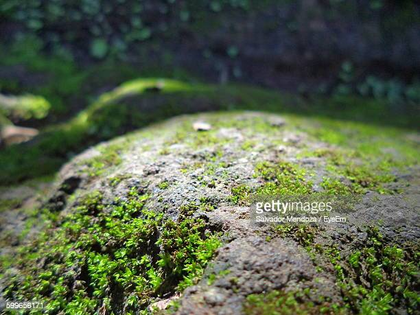 close-up of moss covered rocks - moss stock pictures, royalty-free photos & images