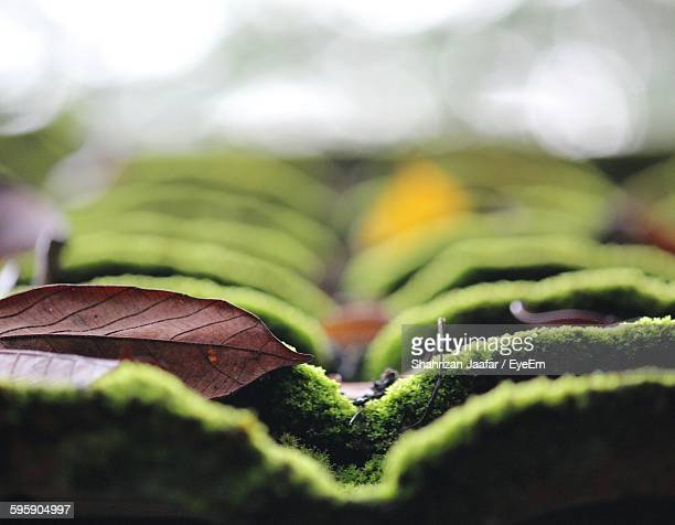 Close-Up Of Moss Covered Roof Tiles