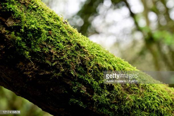 close-up of moss covered tree trunk - tree trunk stock pictures, royalty-free photos & images