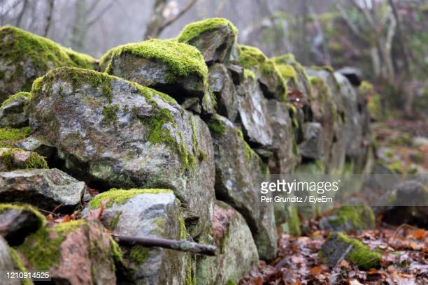 close-up of moss growing on stone wall - stone wall bildbanksfoton och bilder