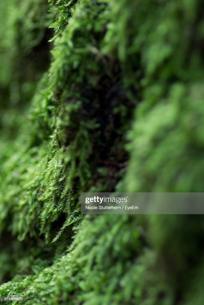 Close-Up Of Moss Growing On Tree : Stock Photo