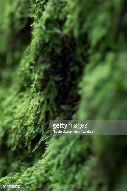 close-up of moss growing on tree - stutterheim stock photos and pictures