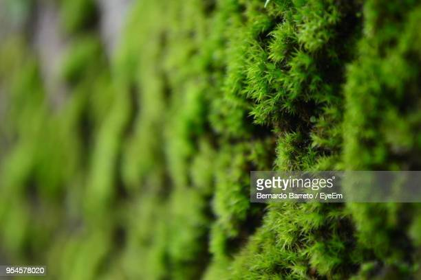 close-up of moss growing on tree - moss stock pictures, royalty-free photos & images