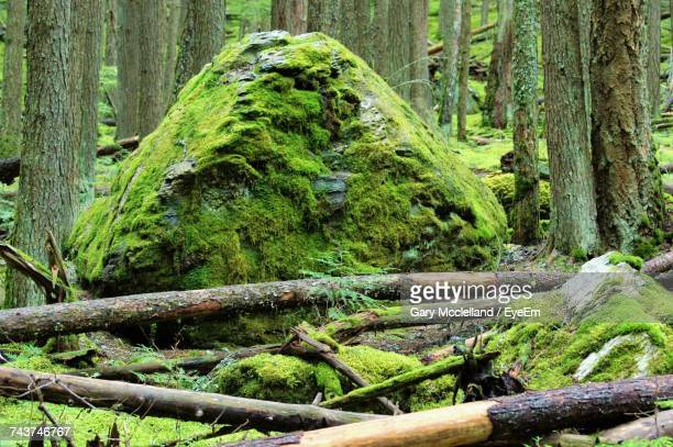 close-up of moss growing on tree trunk in forest - boulder rock stock photos and pictures