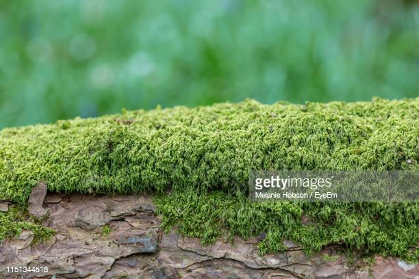close-up of moss growing on tree trunk - moss stock pictures, royalty-free photos & images