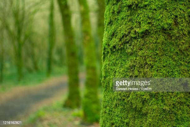 close-up of moss growing on tree trunk - tree trunk stock pictures, royalty-free photos & images