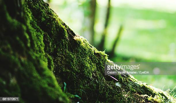 close-up of moss growing on tree trunk - tronco d'albero foto e immagini stock