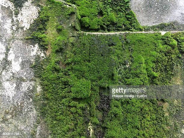 close-up of moss growing on wall - moss stock pictures, royalty-free photos & images