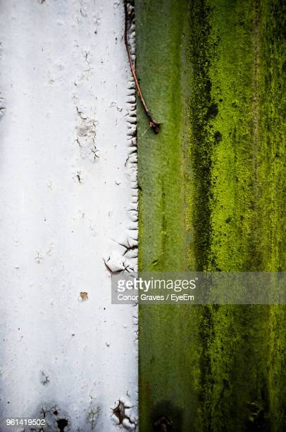 close-up of moss growing on wall - conor stock pictures, royalty-free photos & images