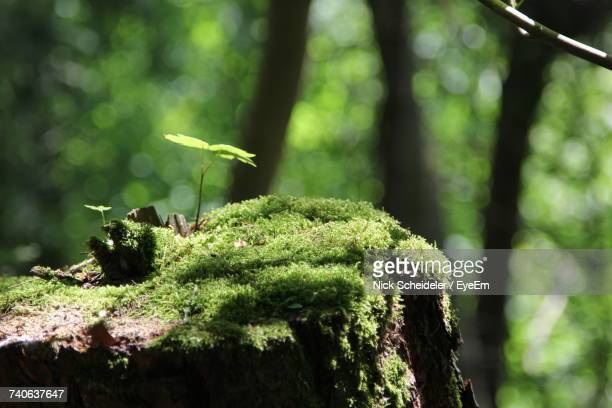 close-up of moss on tree in forest - moss stock pictures, royalty-free photos & images