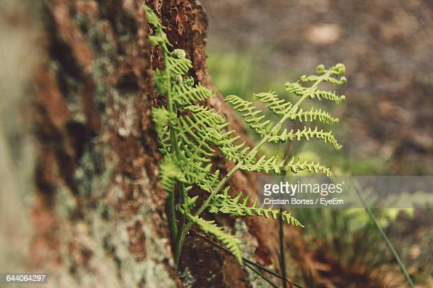 close-up of moss on tree trunk - bortes stock photos and pictures