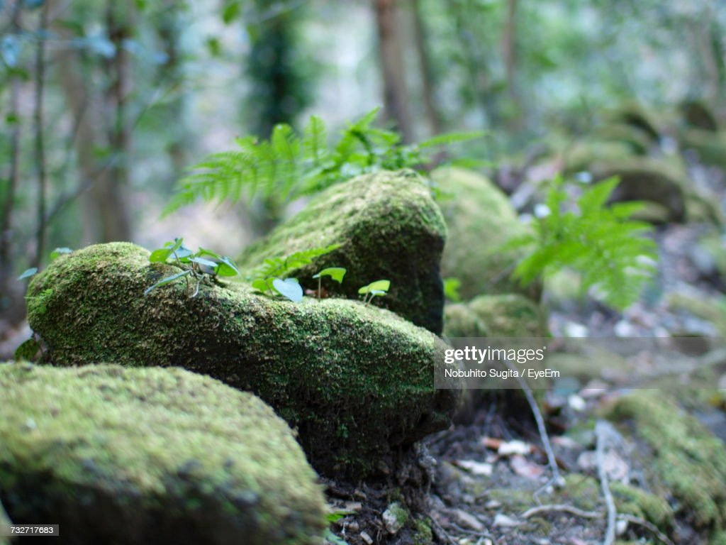 Close-Up Of Moss On Tree Trunk : Stock Photo