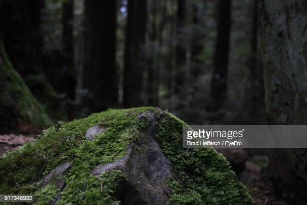 close-up of moss on tree trunk - moss stock pictures, royalty-free photos & images