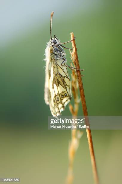 close-up of moth on plant - papillon de nuit photos et images de collection