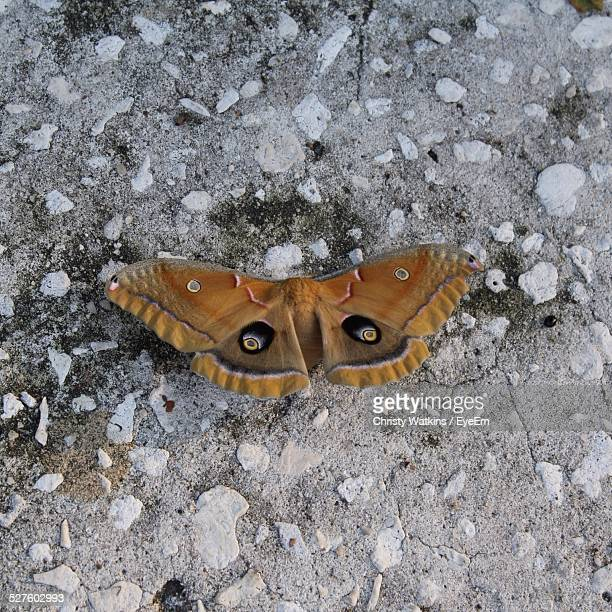 Close-Up Of Moth On Rock