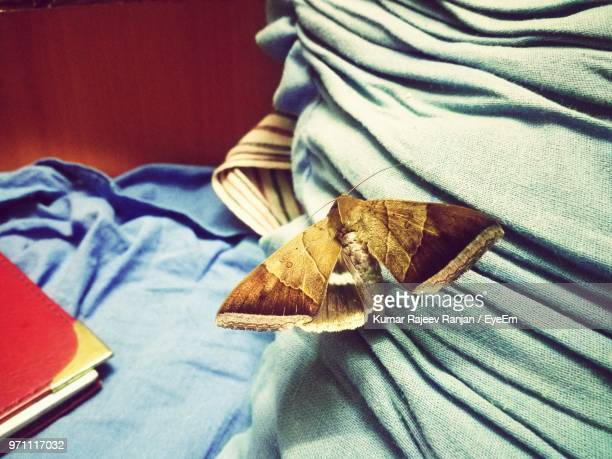 close-up of moth on textile - moth stock pictures, royalty-free photos & images