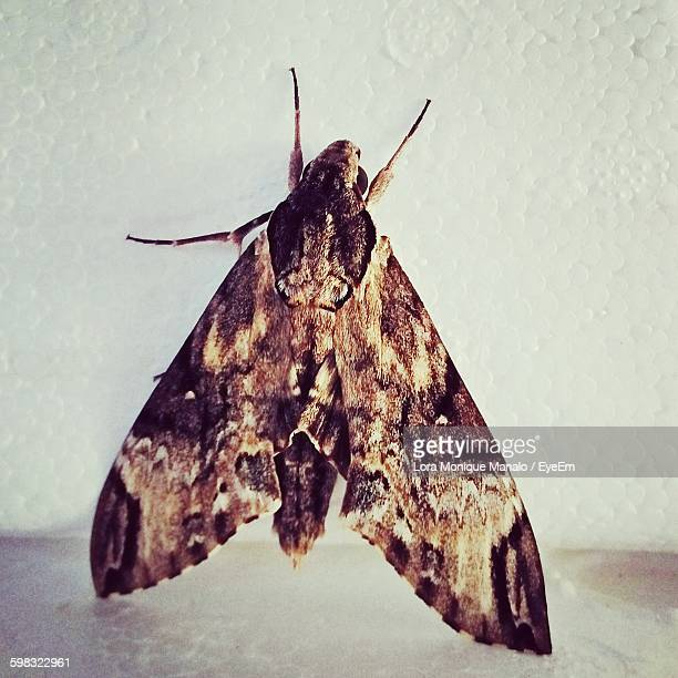 Close-Up Of Moth On Wall