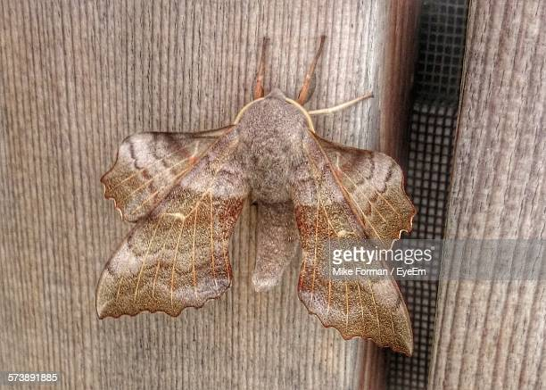 Close-Up Of Moth On Wooden Wall