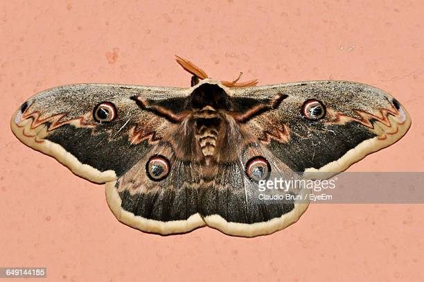 close-up of moth - papillon de nuit photos et images de collection