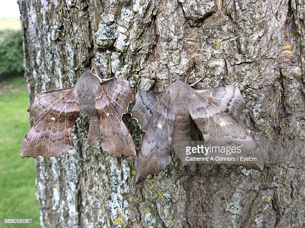 close-up of moths on tree trunk - papillon de nuit photos et images de collection