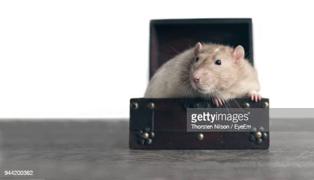Close-Up Of Mouse In Chest On Table Against White Background