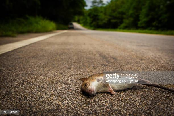 close-up of mouse on road - roadkill stock photos and pictures