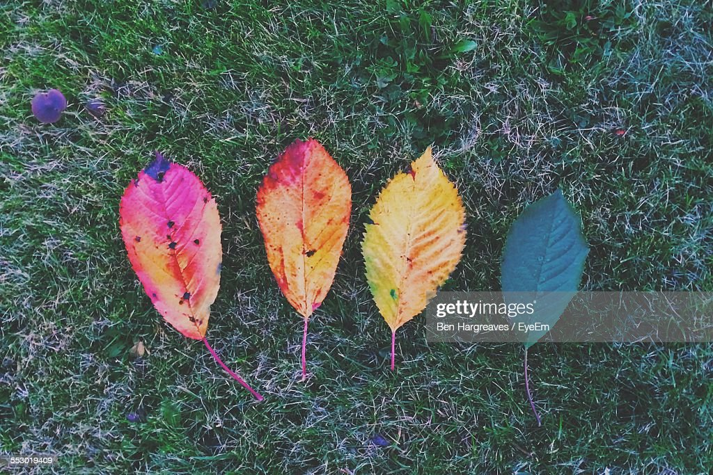 Close-Up Of Multi Colored Fallen Leaves : Stock Photo