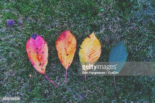 Close-Up Of Multi Colored Fallen Leaves