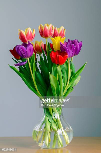 Close-Up Of Multi Colored Tulips