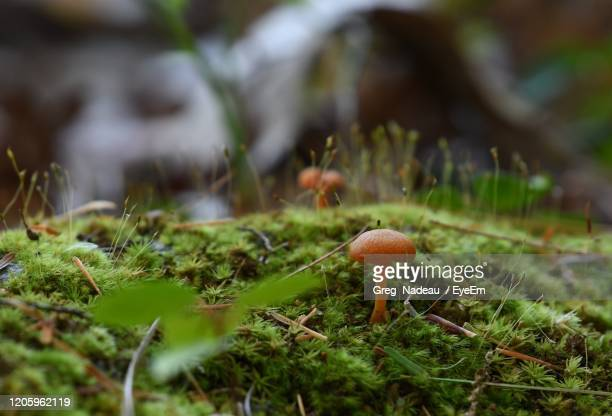 close-up of mushroom growing on field - greg nadeau stock pictures, royalty-free photos & images