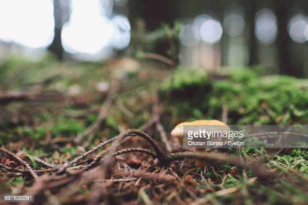 close-up of mushroom on grass - bortes stock pictures, royalty-free photos & images