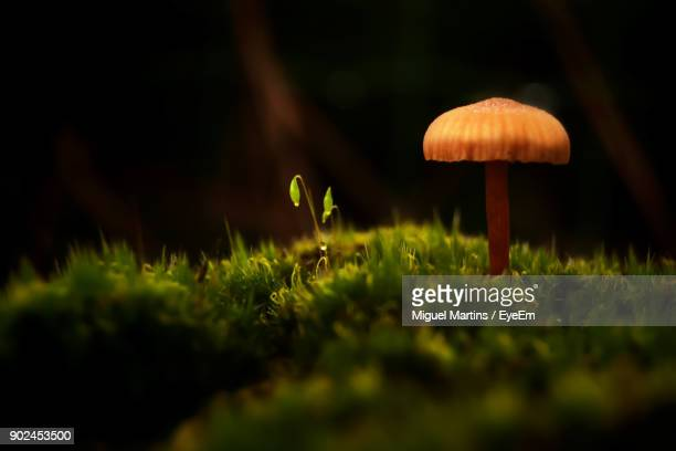 Close-Up Of Mushroom On Grass