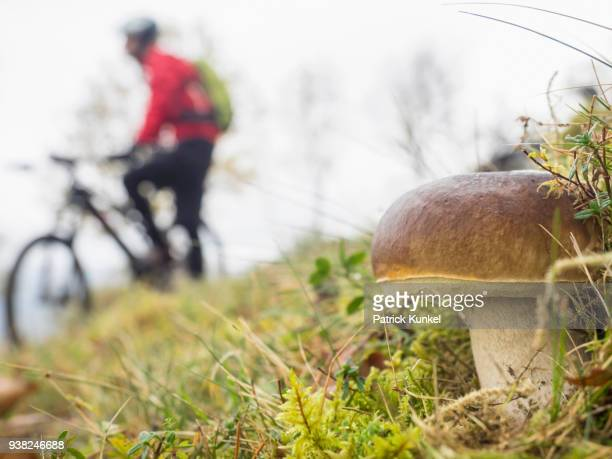 close-up of mushroom with mountain biker in the background, vosges, france - gras bildbanksfoton och bilder