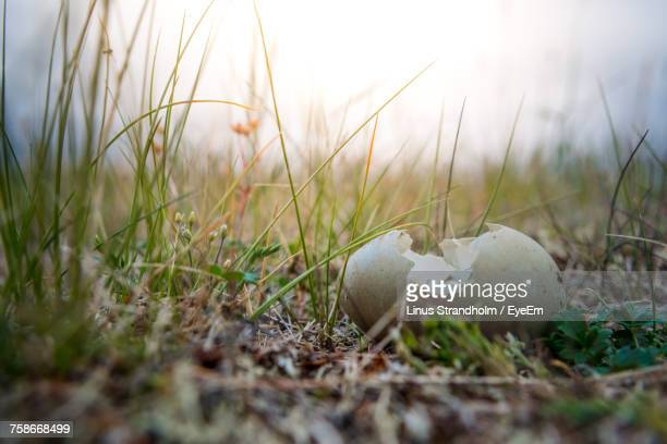close-up of mushrooms growing on field against sky - nunavut stock pictures, royalty-free photos & images