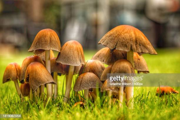 close-up of mushrooms growing on field,newcastle upon tyne,united kingdom,uk - newcastle united pictures stock pictures, royalty-free photos & images