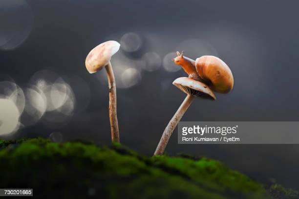 Close-Up Of Mushrooms Growing On Plant