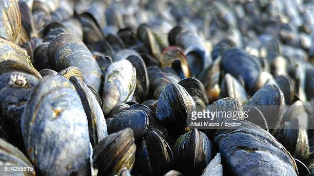 close-up of mussels - mussel stock pictures, royalty-free photos & images