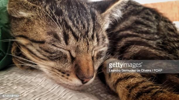 Close-up of nabbing cat