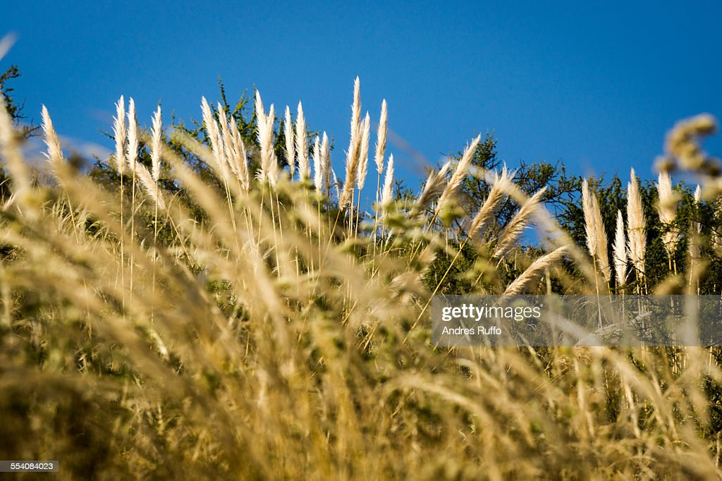 Close-up of native vegetation of the mountains : Stock Photo