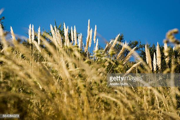 close-up of native vegetation of the mountains - andres ruffo stock pictures, royalty-free photos & images