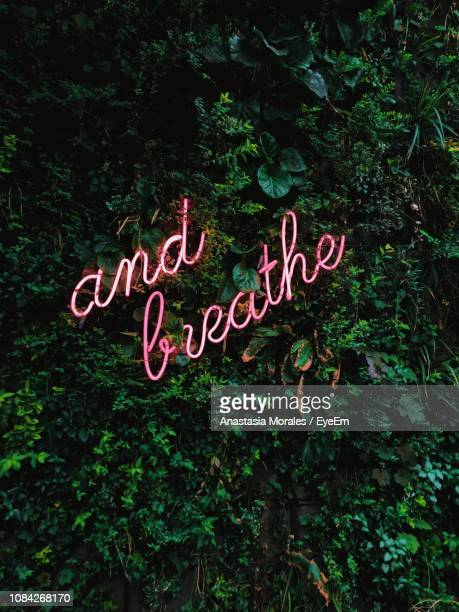 close-up of neon text on tree - neon letters stock photos and pictures