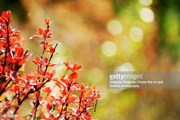 close-up of new growth at spring - gregoria gregoriou crowe fine art and creative photography - fotografias e filmes do acervo