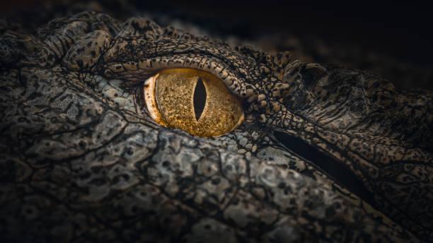 Close-up of Nile Crocodile Eye