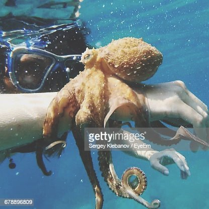 Closeup Of Octopus On Hand High Res Stock Photo Getty Images