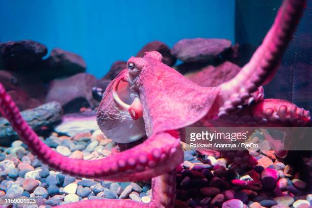 close-up of octopus swimming in aquarium - tentacle stock pictures, royalty-free photos & images